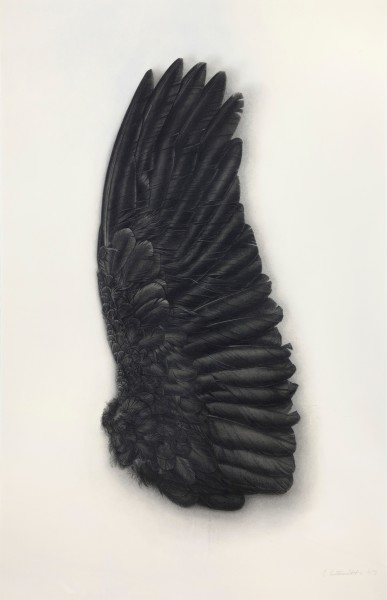 Elizabeth Butterworth, Black Wing, Underside