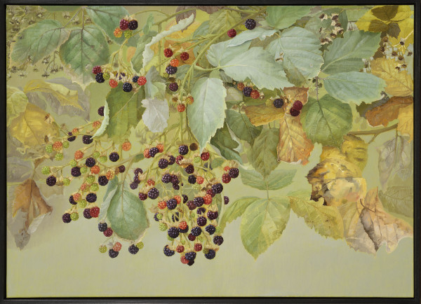 Jane Wormell, Blackberries, Early Autumn, 2020