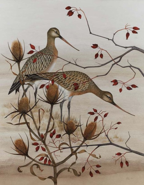 Harriet Bane, Bar Tailed Godwits