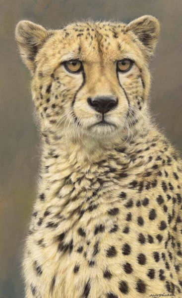 Gary Stinton, Cheetah - Large as Life VII