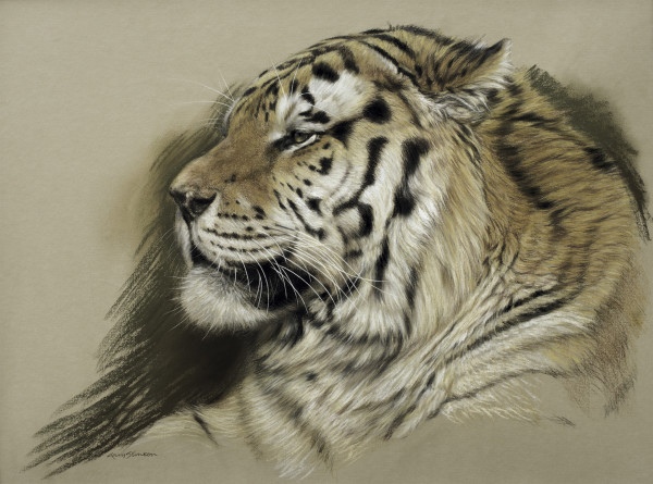 Gary Stinton, Study of Amur Tiger