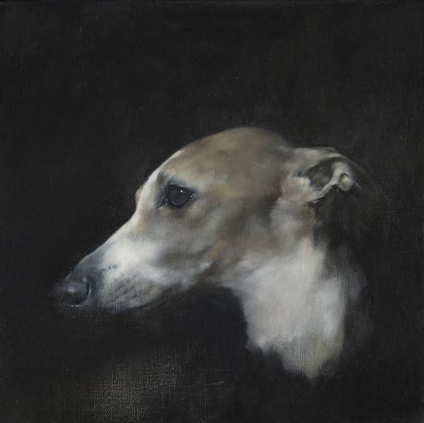 Justin Coburn Whippet Head Study I Oil on linen 15.75 x 15.75ins (40 x 40cm) (artwork size) 17.72 x 17.72ins (45 x 45cm) (framed size)