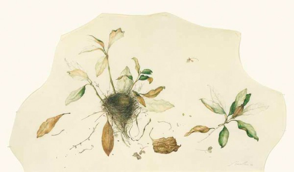 Kate Nessler, Nest in the Magnolia