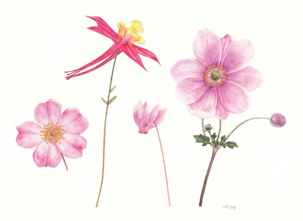 Rachel Pedder-Smith, Four Pink Flowers