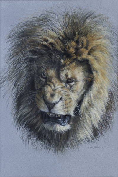 Gary Stinton, Study of Snarling African Lion