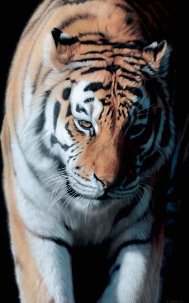 Gary Stinton, Amur Tigress