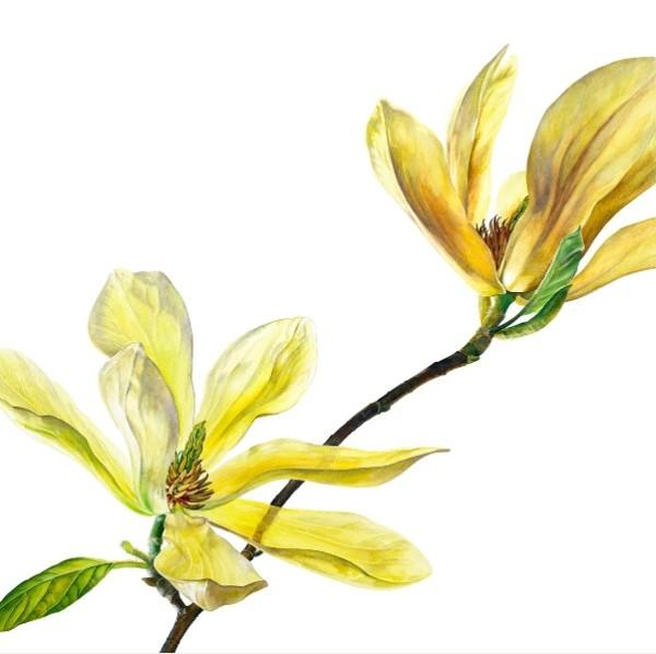 Rosie Sanders, Magnolia Butterflies