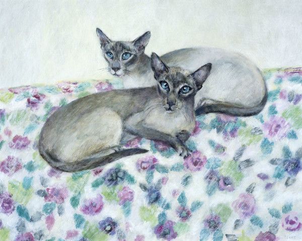 Tracy Rees Siamese Acrylic on board 10.6 x 13.4ins (27 x 34cm)