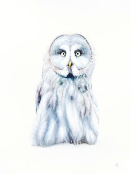 Peter Haslam-Fox, Owlet