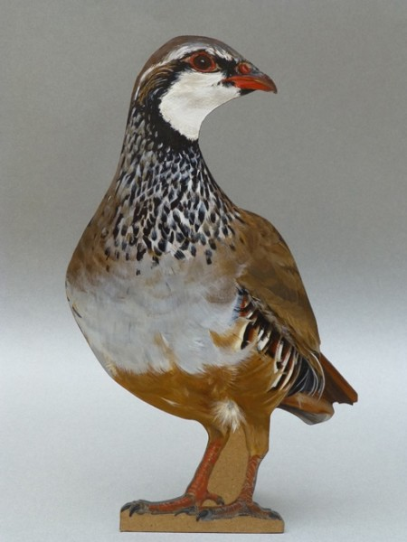 Camilla Clutterbuck, Red-legged Partridge
