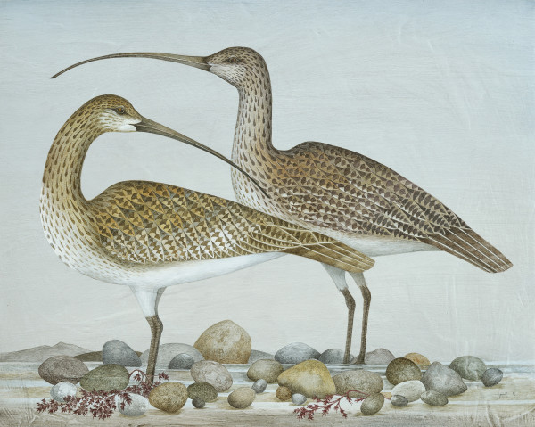 Harriet Bane, Two Curlews
