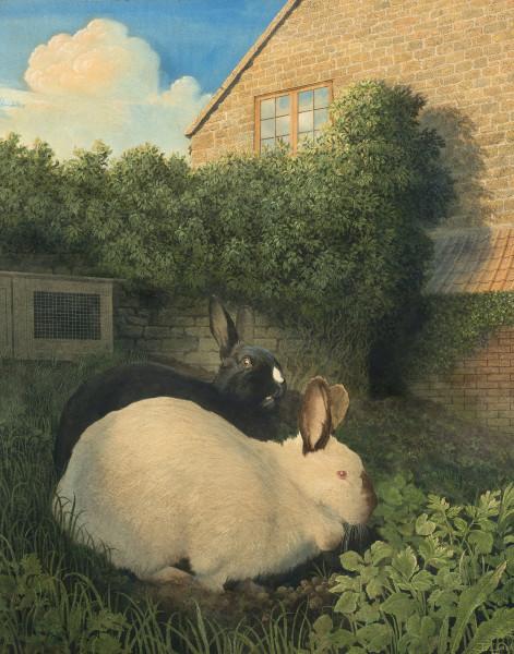 James Lynch, Rabbits, Cutterne Mill