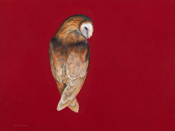 Tim Hayward Barn Owl - Cinnabar Watercolour and gouache on Fabriano Artistico 300gsm paper 18 × 22 ins (45.72 × 55.88 cm)