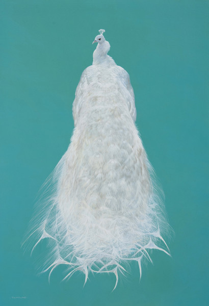 Tim Hayward, White Peacock - Aqua