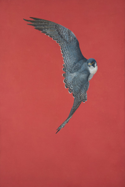 Tim Hayward Soar - Red Watercolour and gouache on Fabriano Artistico 300gsm paper 60 x 40ins (152.4 x 101.6cm)