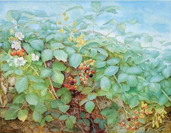 Jane Wormell, Blackberry Hedge