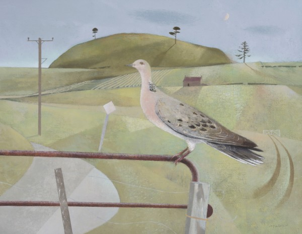 Turtle Dove and September Light