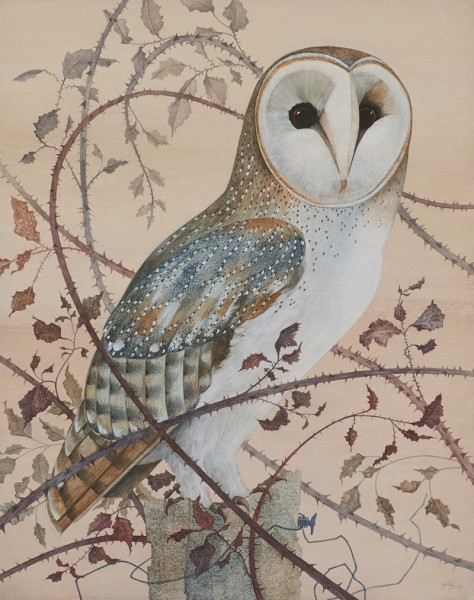 Harriet Bane, Barn Owl in Brambles