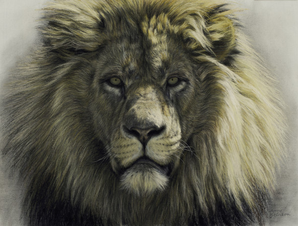Gary Stinton, Study of African Lion's Face