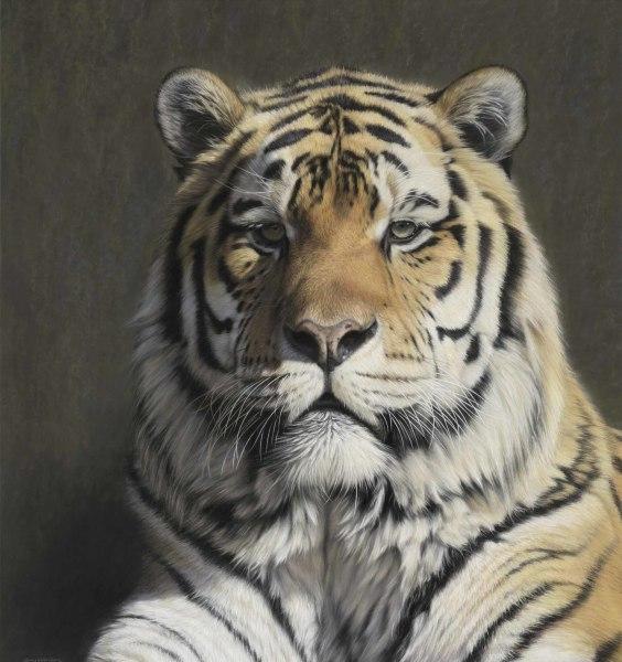 Gary Stinton, Panthera tigris altaica