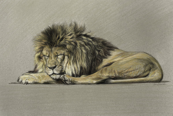 Gary Stinton, Study of Sleeping African Lion