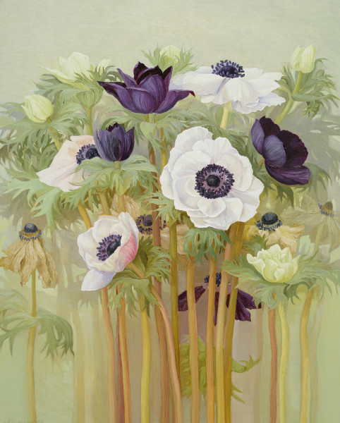 Jane Wormell  Anemones  Oil on linen  19.75 x 15.75ins (50 x 40cm)