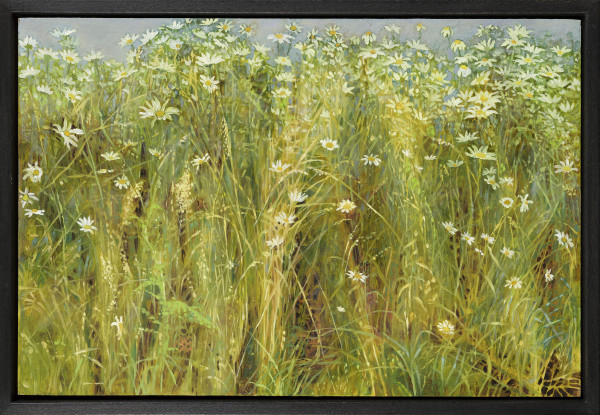 Jane Wormell Oxeye Daisies, 2020 Oil on board 7.87 x 11.81ins (20 x 30cm) (artwork size) 8.66 x 12.6ins (22 x 32cm) (framed size)