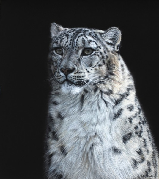 Gary Stinton, Intent Gaze - Snow Leopard