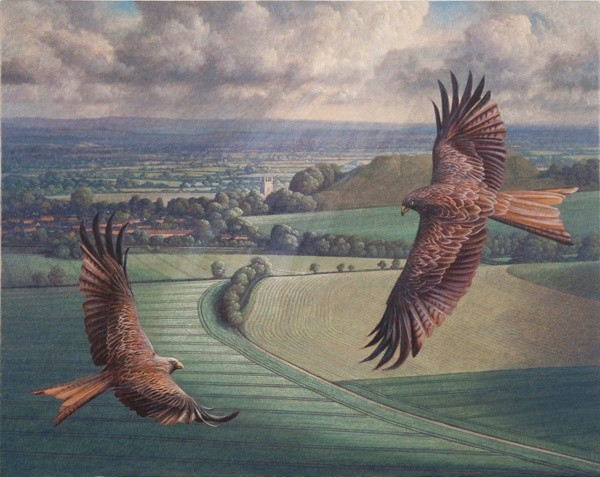 James Lynch, Red Kites in Mere Bowl