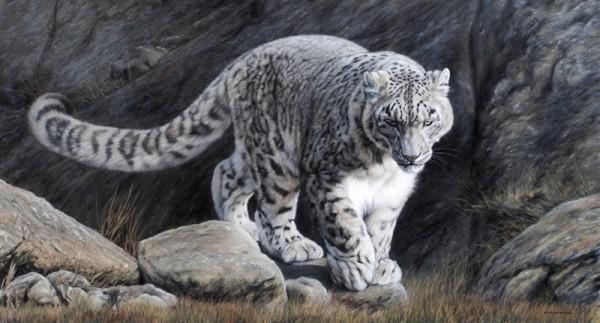 Prowling Snow Leopard