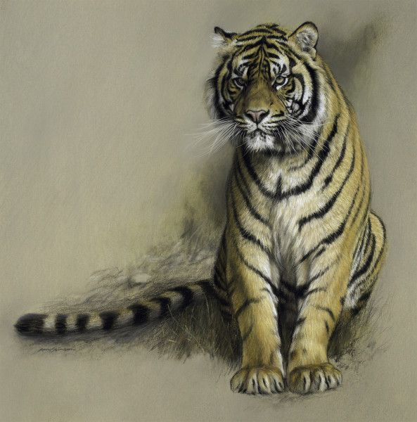 Gary Stinton, Study of Sumatran Tiger