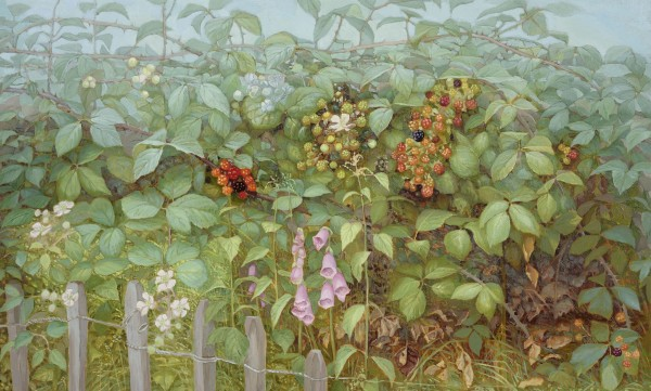 Jane Wormell, Blackberry Hedge II