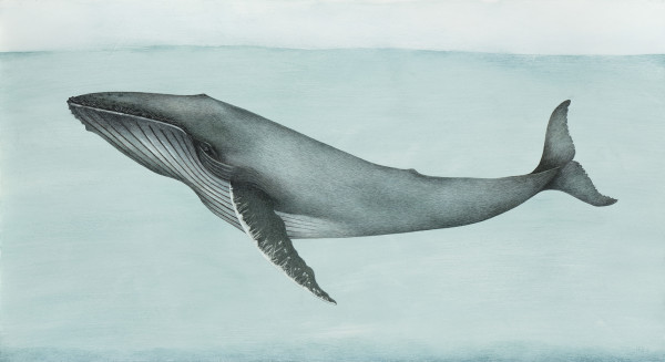 Harriet Bane Humpback Whale Watercolour and acrylic on plaster 21.7 x 39.4ins (55 x 100cm)