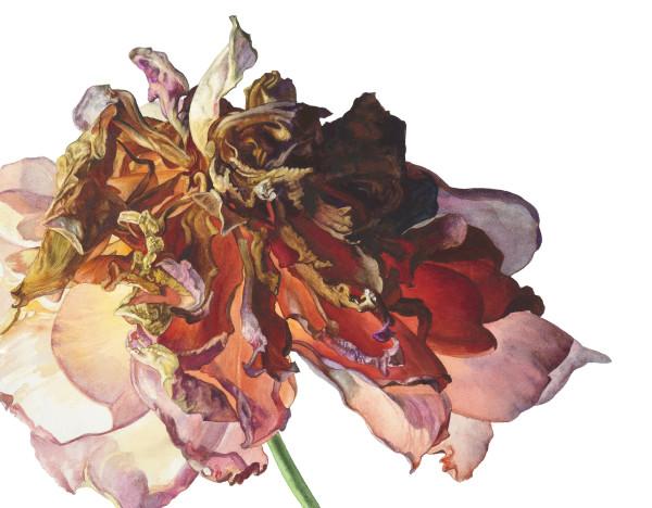 Rosie Sanders Traje de gitana Watercolour on Richard de Bas handmade paper 15.35 x 19.68ins (39 x 50cm) (artwork size) 20.39 x 24.8ins (51.8 x 63cm) (framed size)