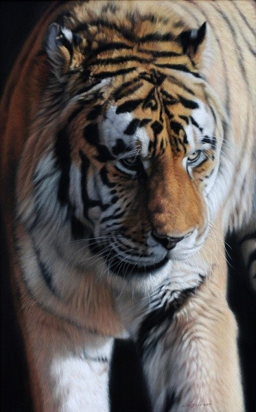 Gary Stinton, Glancing Tiger
