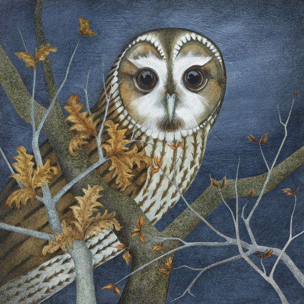 Harriet Bane Tawny Owl Watercolour and acrylic on plaster 18 x 18ins (46 x 46cm)