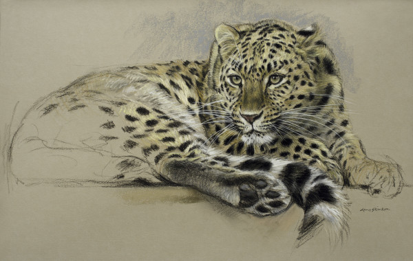 Gary Stinton, Study of Amur Leopardess at Rest