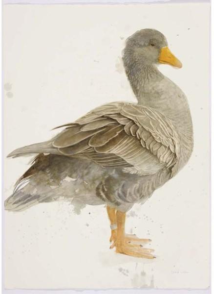 Roland Corbin, Greylag Goose