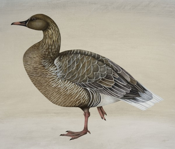 Harriet Bane Pink Footed Goose Watercolour and acrylic on plaster 20 x 24ins (50.8 x 61cm)