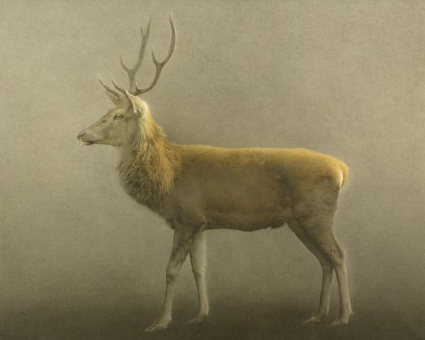 Marzio Tamer, Deer
