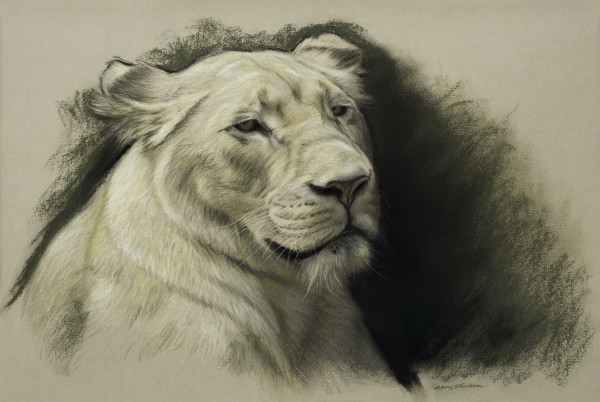 Gary Stinton, Study of White Lioness