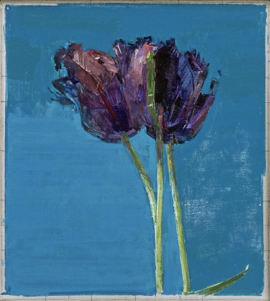 Ben Henriques, Parrot Tulips