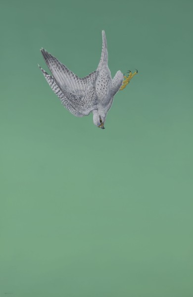 Tim Hayward, Green Swoop (Gyrfalcon)