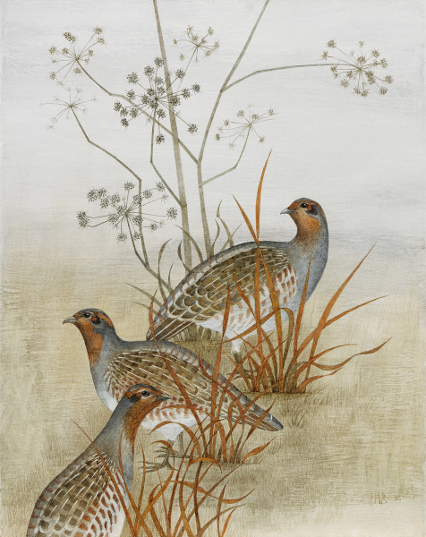 Harriet Bane Three Partridges Watercolour and acrylic on plaster 20 x 16ins (51 x 40.5cm)