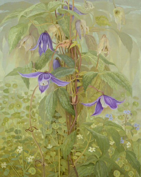 Jane Wormell, Early Clematis and Euphorbia