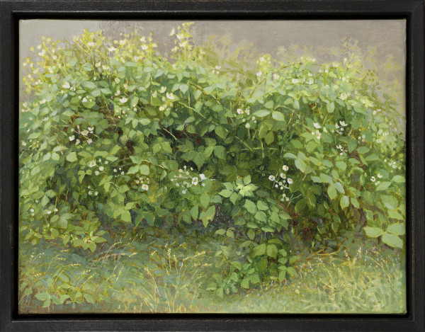 Jane Wormell, Flowering Brambles, 2020