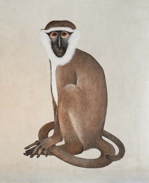 Harriet Bane, Vervet Monkey