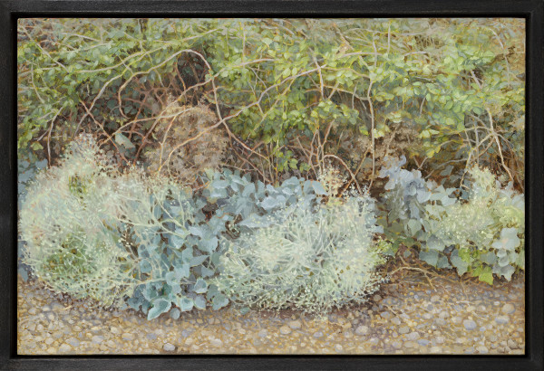 Jane Wormell, Sea Kale on the Shingle, 2020