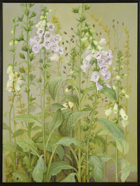 Jane Wormell, Foxgloves, 2020
