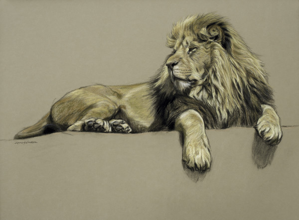 Gary Stinton, Study of African Lion at Rest